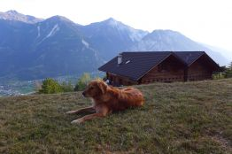 Sitzplatz Bergsicht Hund Wallis